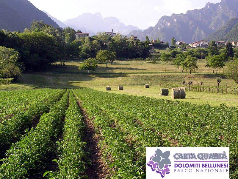 Cooperativa Agricola La Fiorita s.c.a.