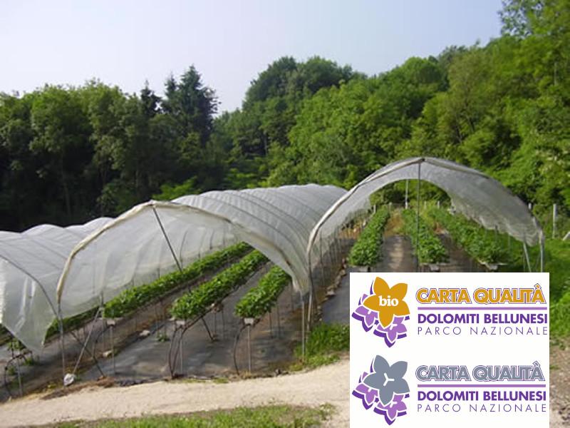 Az. Agricola La Giasena
