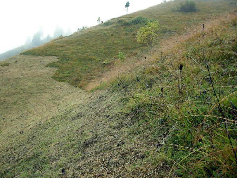 B19 - Pianificazione e mappatura degli interventi di sfalcio e di contenimento del bosco - Stato di fatto delle aree prative