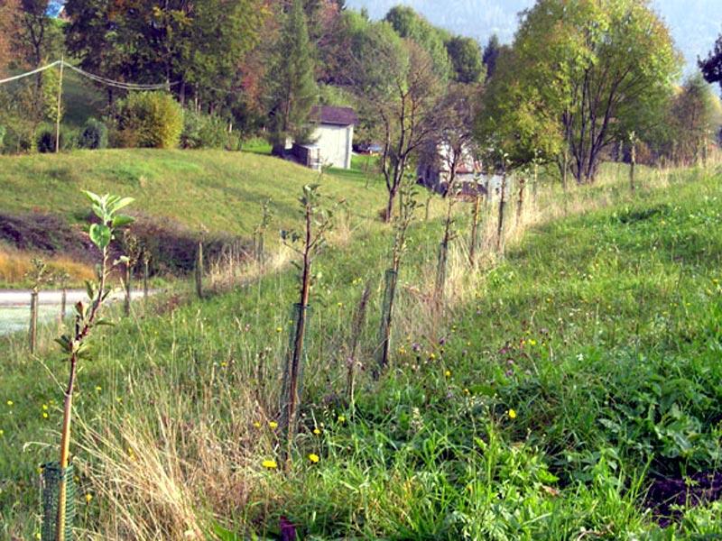 B18 - Antropizzazione di un territorio: la biodiversità coltivata