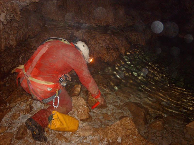 A54 - Gli invertebrati negli ambienti acquatici sotterranei e sorgentizi del Parco Nazionale delle Dolomiti Bellunesi