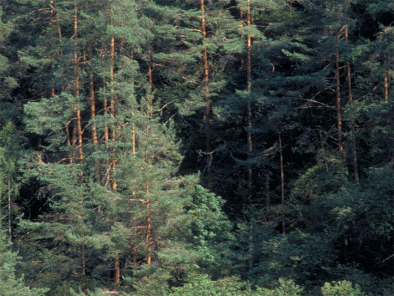 B4 - Flora, vegetazione e dinamismo lungo il torrente Cordévole (nel tratto del Parco) + morfometria delle ghiaie del torrente