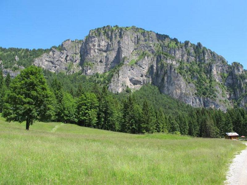 A19 - Avifauna nidificante e struttura forestale.Il caso della foresta di Cajada nel Parco Nazionale Dolomiti Bellunesi