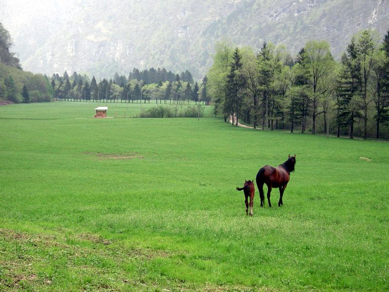 E16 - Indagine sulle attività turistico-ricreative del Parco Nazionale Dolomiti Bellunesi