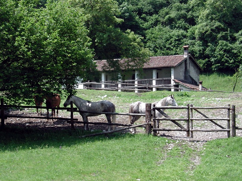 B21 - Il Cordevole un paesaggio nel Parco Nazionale Dolomiti Bellunesi
