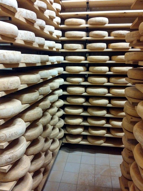 Fromage Casel bellunese