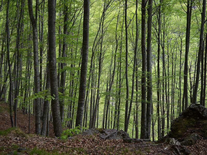 B2 - Aspetti vegetazionali e colturali dei boschi della Val Pegolera (P.N.D.B.)