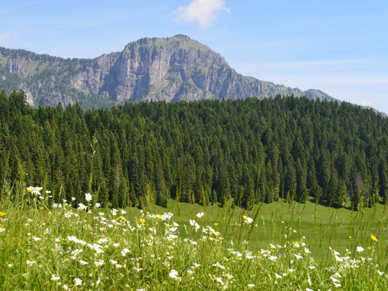 Gli ecosistemi del Parco: dai paesi alle cime