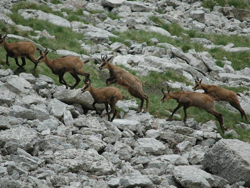 A32 - Monitoraggio delle popolazioni di cervo, capriolo e muflone del PNDB