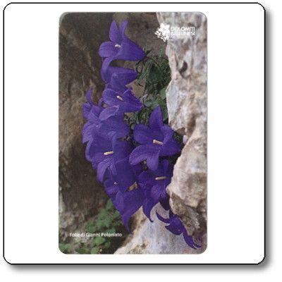 Magnete Campanula morettiana - Parco Nazionale Dolomiti Bellunesi