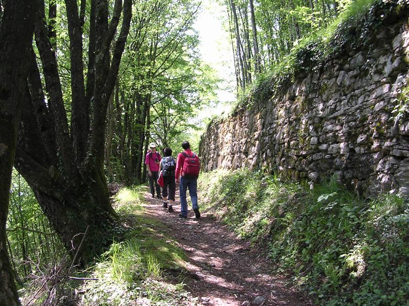 D3 - Proposta di recupero della muratura in pietra nell'ipotesi di sviluppo sostenibile di un contesto rurale prealpino