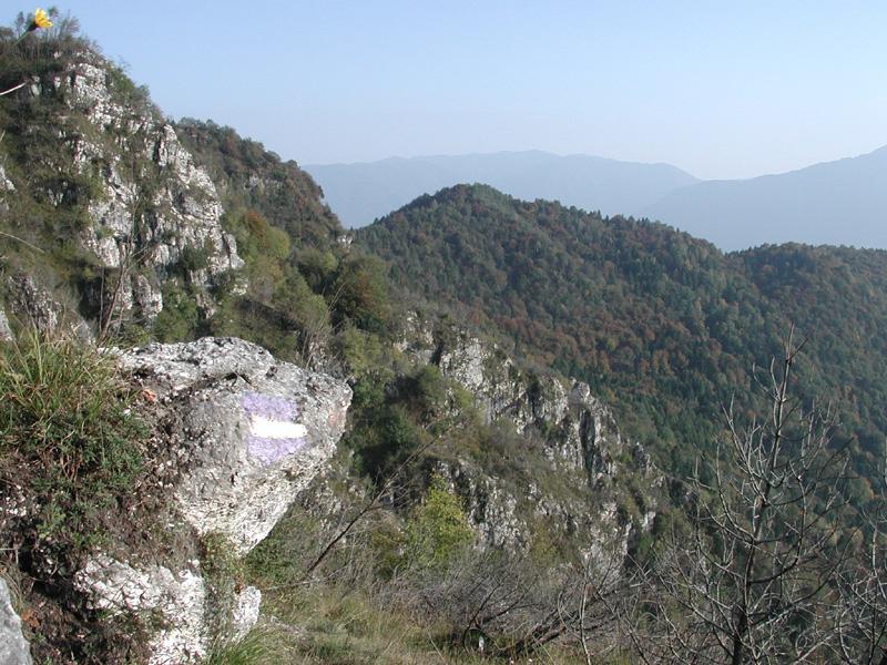 B6 - Le tipologie forestali della Val di Lamen
