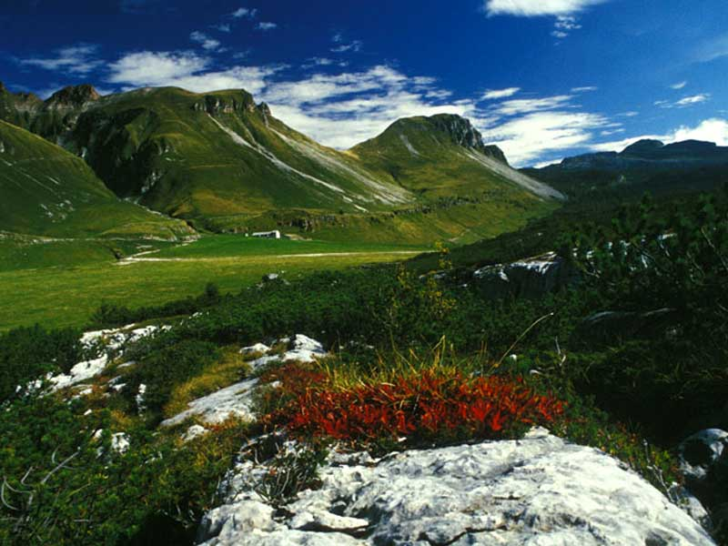 B22 - Definition of climatic change impact on the alpine grassland habitat and its avifaunal species in the Dolomiti Bellunesi National Park, Italy