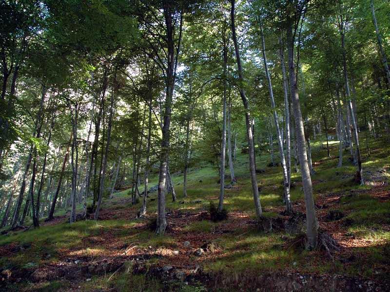B16 - Osservazioni fitosociologiche sulle foreste della Val dei Ross nel PNDB