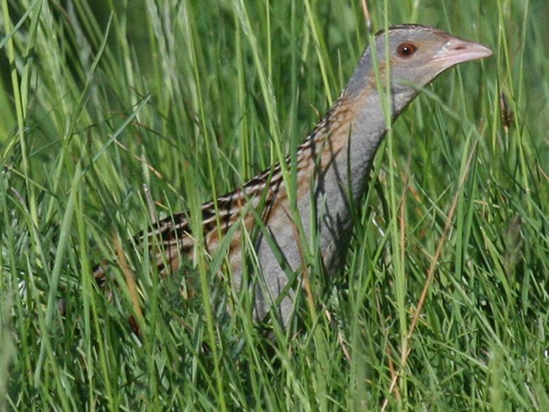 A24 - Elementi di confronto per lo studio della distribuzione degli uccelli nidificanti nel Parco delle Dolomiti Bellunesi negli anni 1998 e 2011