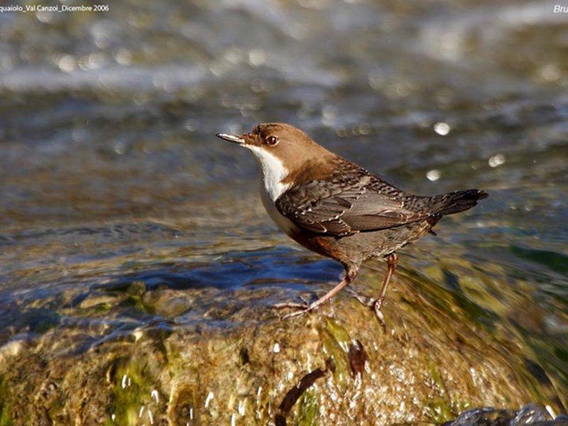 A69 - Interventi per la salvaguardia, monitoraggio e ripopolamento della fauna selvatica nel Parco - studio dell'avifauna: Atlante degli uccelli nidificanti nel Parco