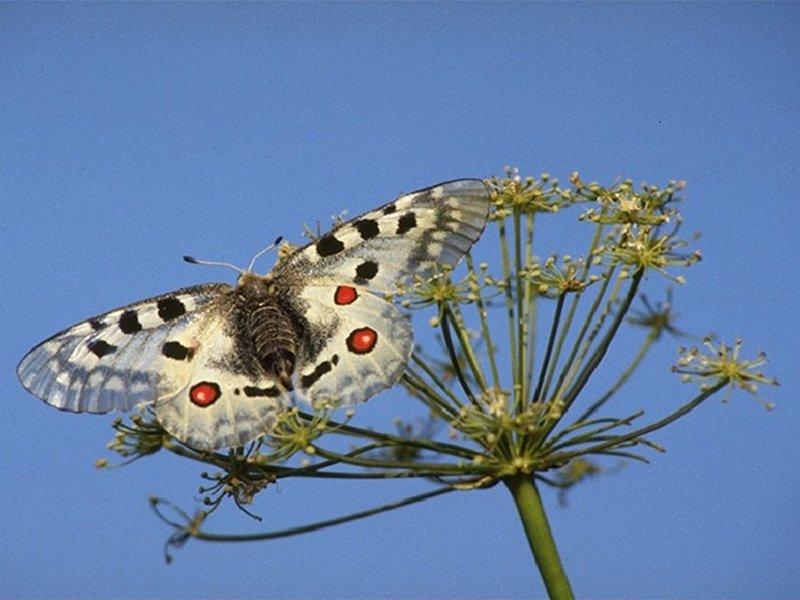 A80 - Biodiversità Alpina: Monitoraggio dei lepidotteri diurni nel Parco Nazionale Dolomiti Bellunesi (2013-2014)