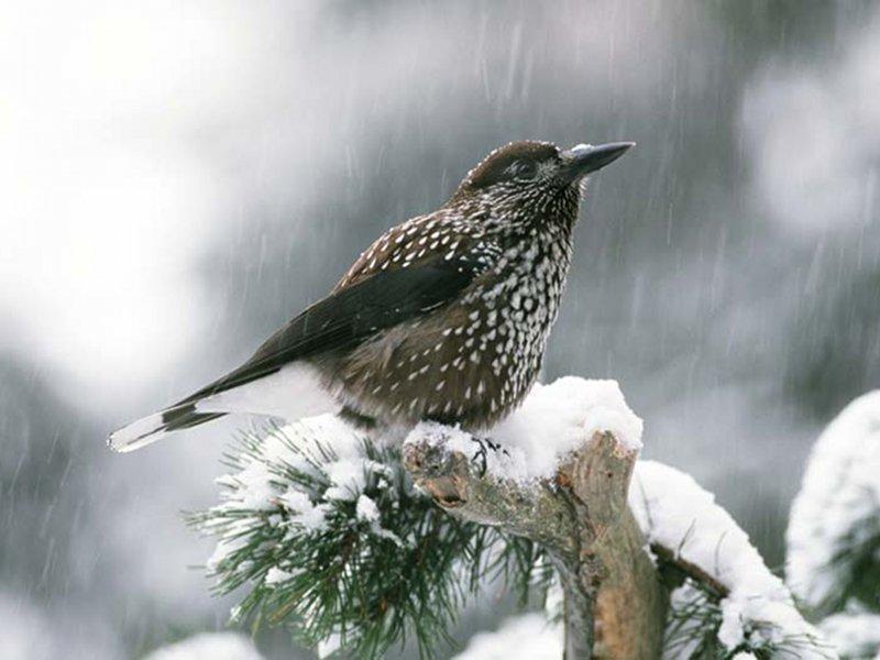 A82 - Biodiversità Alpina: Monitoraggio dell'ornitofauna del Parco Nazionale Dolomiti Bellunesi (2014-2015)