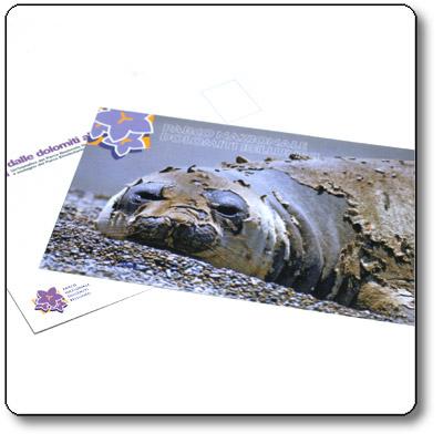 Dalle Dolomiti alle Ande - Cartolina 4