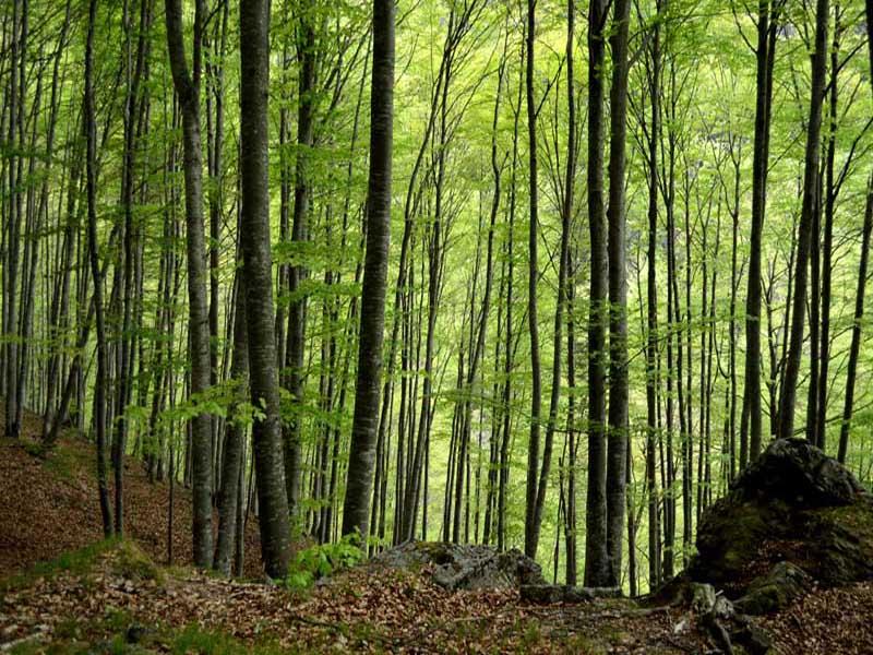 Alberi, foreste, legno: a scuola di gestione forestale nel Parco