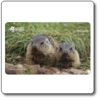 Magnete marmotte - Parco Nazionale Dolomiti Bellunesi