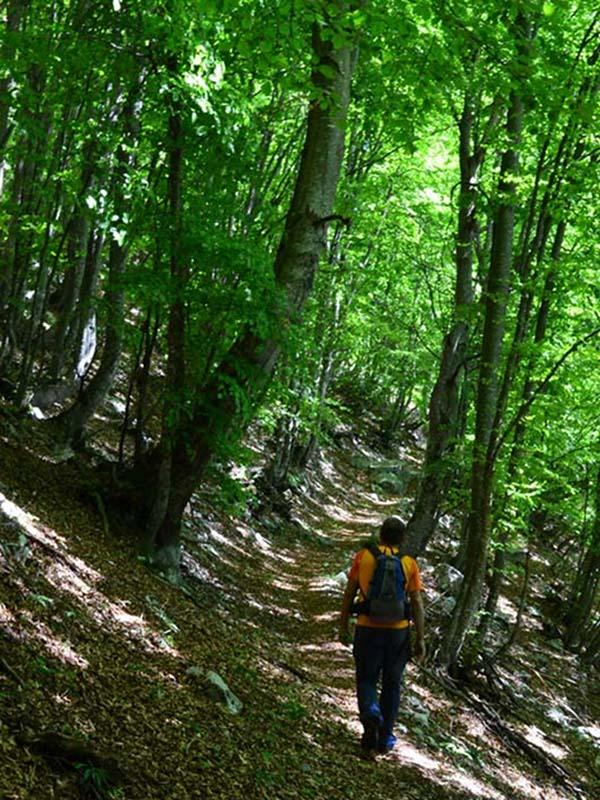 B8 - Aspetti forestali in alta Val Canzoi. Analisi tipologica